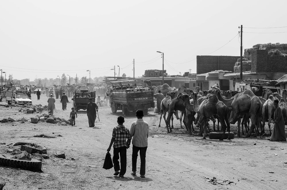 Camels, people, and trucks wander an unpaved road, a snapshot of a Mashtots grant recipient's time in Egypt and the Middle East.